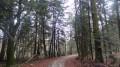 Le chemin de randonnée traverse une forêt de résineux