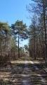 Le chemin de randonnée traverse une forêt mixte