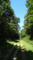 Le chemin en forêt d'Ingrannes