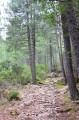 Le chemin en sous bois