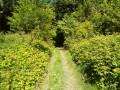 """Chemin en """"tunnel"""""""