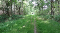 Le chemin est bordé de fougères