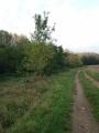 Le chemin forestier sur le GR 655 Est