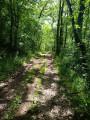 Le chemin ombragé de la remontée