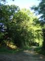 Le chemin vers les Ligers