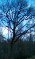 Le circuit des arbres remarquables au départ de Rilly-la-Montagne