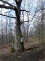 Le chêne de la chapelle