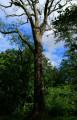 À la découverte du Chêne du Roi depuis Château-Voué
