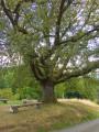 L'Autel de la Baronnie et le chêne de la Gilbernie