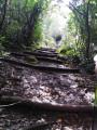 Le début des escaliers