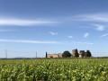 Entre vignes et garrigue autour du Château d'Aiguilhon