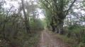 Le GR3C traverse une forêt clairsemeée