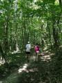 Le grand bois de Buzet