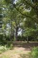 Le Gros Chêne en forêt des Hazelles