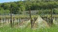 De Rosheim à Ottrott par la voie verte