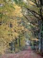 Le long du Bois de Sainte-Sévère