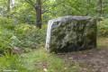 Dans la forêt autour de Montigny