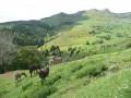 Mont Mezenc depuis Borée
