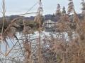 Le moulin du pré depuis la rive du Doubs