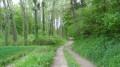 Le parcours traverse un espace boisé