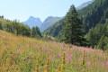 Le Petit Belvédère du Mont Viso au départ de la Roche Écroulée