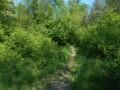 Le petit sentier d'accès au vieux Rhin