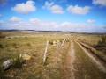 Le plateau, Baboyères au deuxième plan