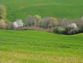 Le printemps à Simorre: arbres en fleurs et cultures bien vertes