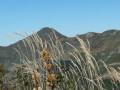 Le Puy Mary vu du Puy Griou