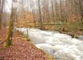Le tour des étangs du Rançon et du Martinet au cœur de la forêt planoise