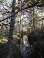 Le ruisseau d'Arignan