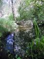Le ruisseau de Bonnefont
