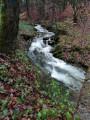 Le ruisseau de la Gire