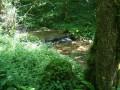 Le ruisseau de la Vau
