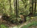 Le ruisseau du Genon