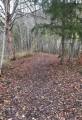 Le sentier à travers bois