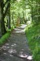 Le sentier boisé