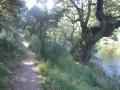 Le sentier de la rive