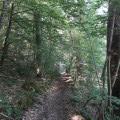 """Le sentier de randonnée à l'approche du hameau """"le Coudert"""""""