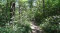 Le sentier de randonnée dans la forêt de Boulogne