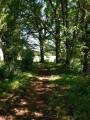 Le sentier des Bessons sous les arbres