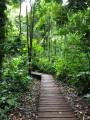 Le sentier du chemin de Rorota