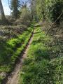 Le sentier en lisière du bois de Cranne
