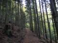 Le sentier passe en forêt