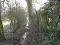 Le sentier-ruisseau après le point (9)