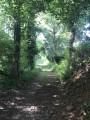 Le sentier sous les arbres