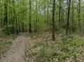 Au Nord des étangs des Maffrais dans la Forêt de Rennes