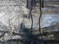 Les étangs de Rosnay au fil des bouchures