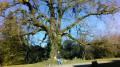 Bois d'Enfiré et Fontaine de la Belle