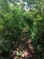 le tunnel de verdure